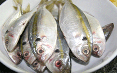 Ướp cá chỉ vàng